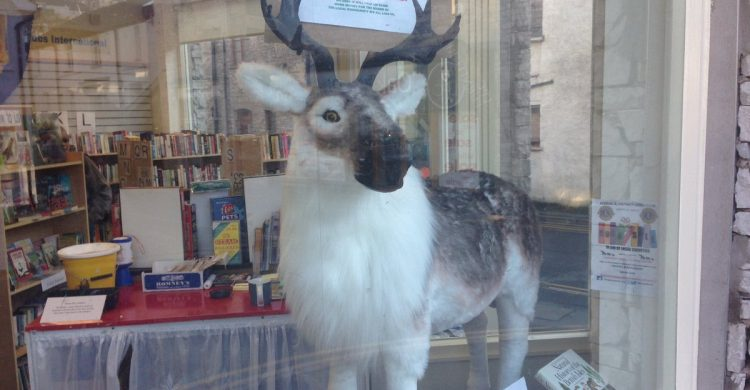Reindeer in Kendal & District Lions book shop window. The competition to give him a name is open until 4pm on Saturday 11 February 2017.